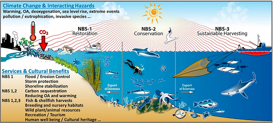 Ocean benefits are essential to keep a healthy planet / FutureMARES